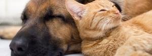 dogsandcats.jpg